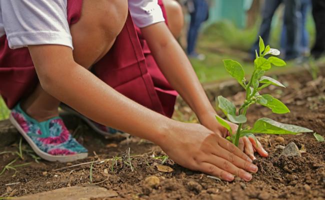 Environmentally savvy teaching